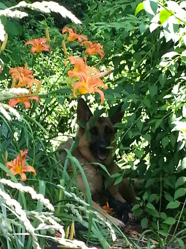In the flowerbed 1
