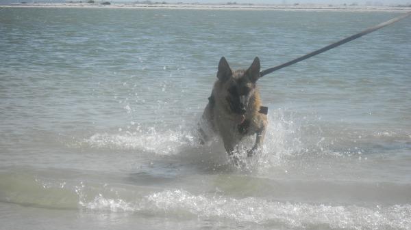 Sunny Florida Beach 21