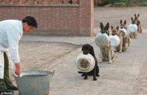 police-dogs-in-line-upshout dot com